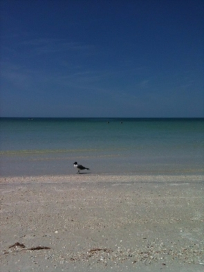 looking out to the Gulf of Mexico