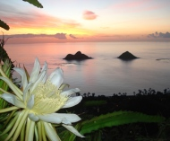 Sunrise above Lanikai, Hawaii