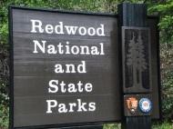 Meeting Giants in Redwood NationalPark