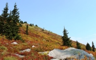 Fall Colors on Granite Mountain