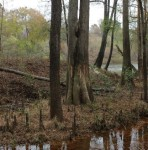 Cliffs of the Neuse StatePark