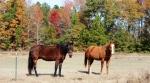 Horses at thefarm